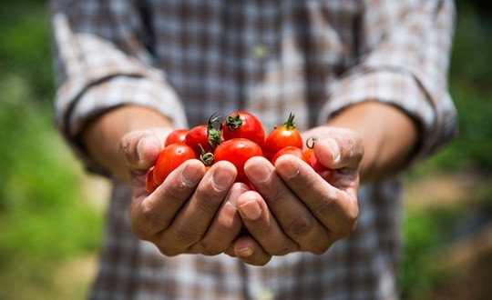 유기농 식품 구입은 자연친화적 선택