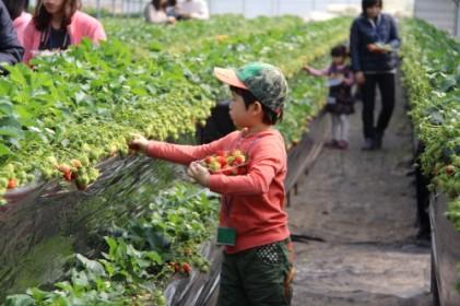 물맑은 양평 딸기 도시락 축제 2018