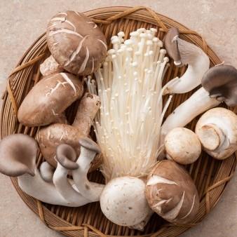 버섯, 유산균과 비피더스균 늘려 장내 환경 개선 효과
