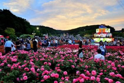 울산대공원 장미축제 2018