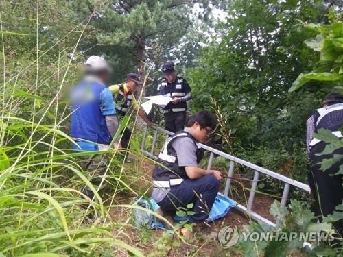 드론으로 구석구석 단속…산나물 불법 채취 처벌받는다