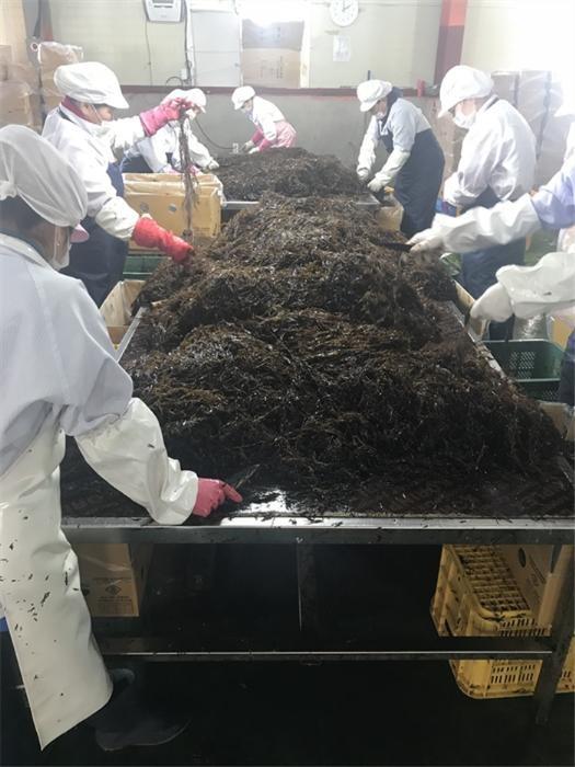 aT, 바다의 슈퍼푸드 완도산 '굉생이 모자반' 일본 첫 수출