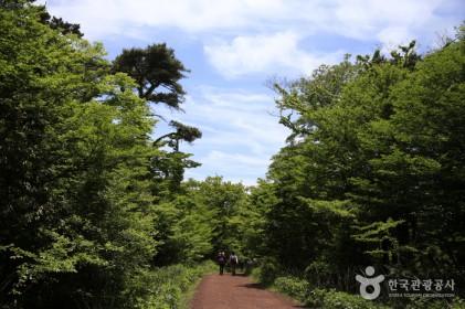 제주 사려니숲 에코힐링 2018