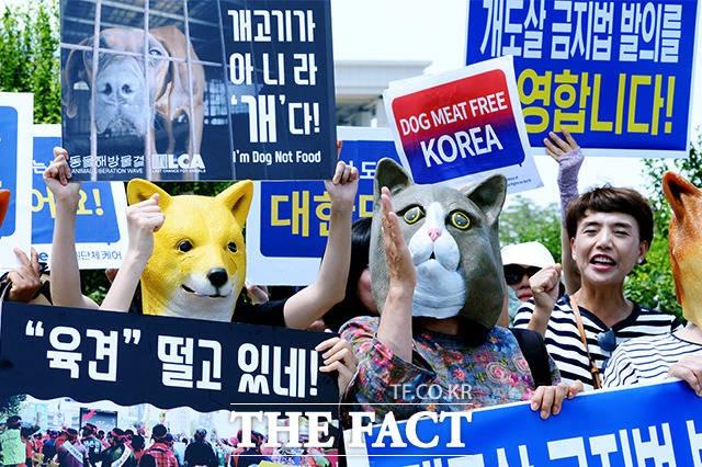 동물권 단체 케어, '개도살 금지법 발의를 환영합니다!'