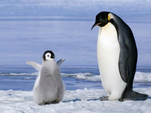 남극은 지금 영하 97.8도…'실존하는 가장 낮은 기온'