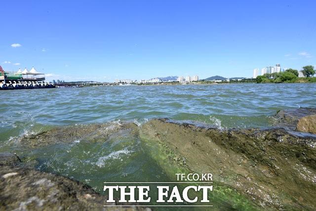 한강도 '녹조라떼' 비상, 시시각각 초록빛 오염