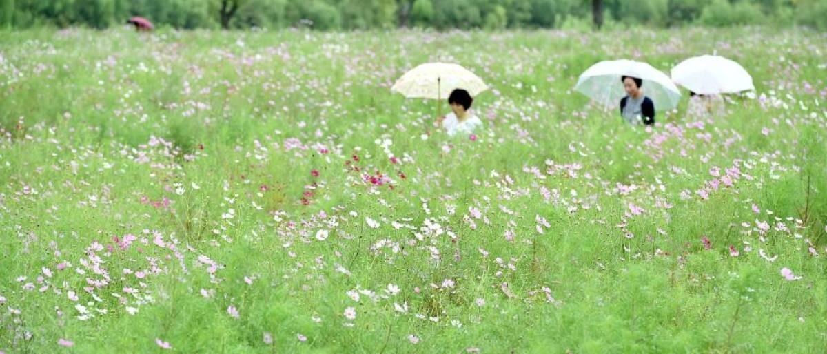 전국 대부분 비… 백두산은 '맑음'