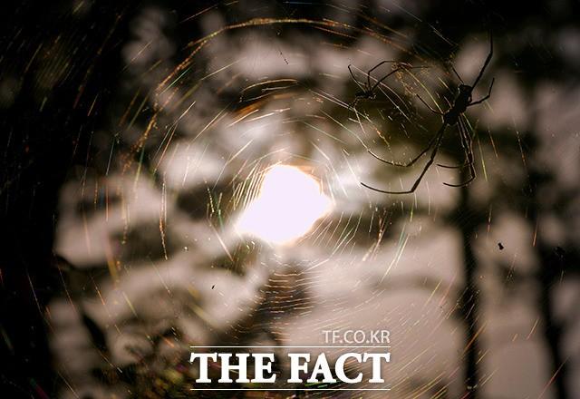 '화창한 가을 햇살 아래 오색의 거미줄'