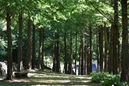 미동산 숲과의 만남 2018