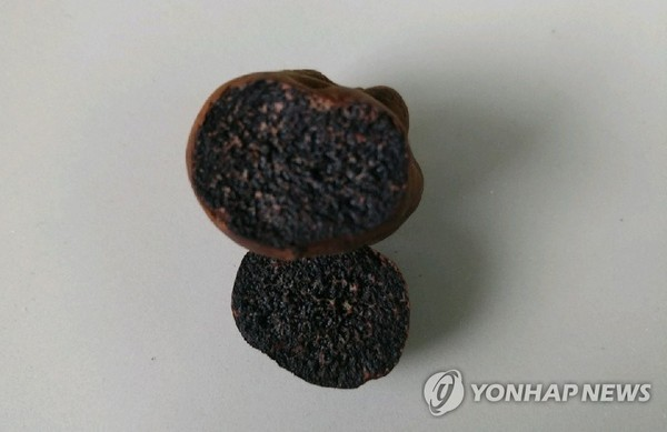 송로버섯 추정 발견, 가격 따져보니…1.5kg가 3억대에 거래되기도
