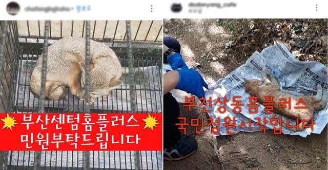 홈플러스, 동물학대 논란에 '불매운동' 불똥 튈까