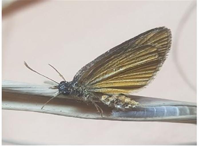 멸종위기 '은줄팔랑나비' 금강서 348마리 발견