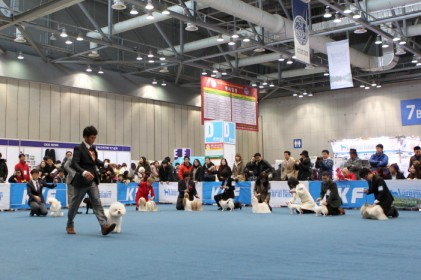 안성 FCI 국제 도그쇼 2018