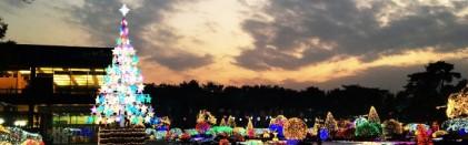 벽초지수목원빛축제-거울나라의 빛축제 2019