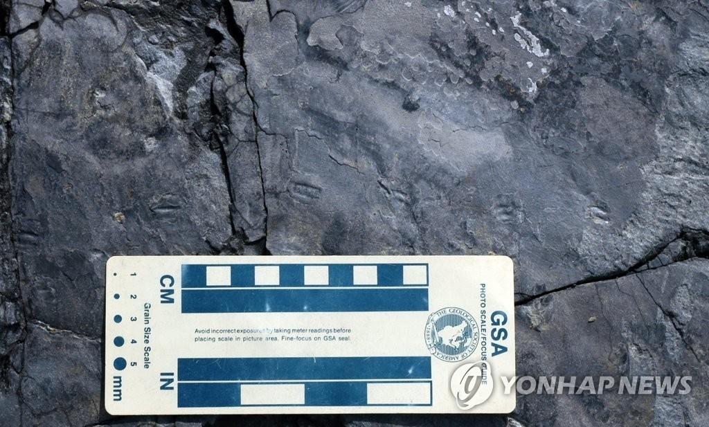 세계 최소 1㎝ 랩터 공룡발자국 화석, 진주서 발견