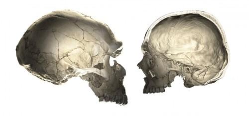 인류 직계조상은 네안데르탈인? 현대인 두개골에도 영향