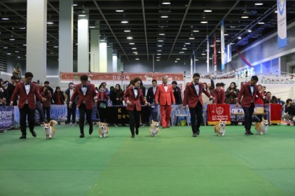 KKF 베스트 오브 베스트 챔피언쉽 도그쇼 2018
