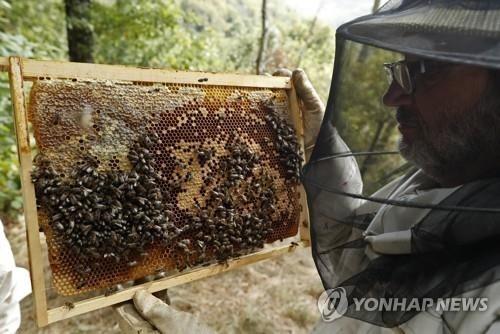 핀란드 연구팀, '꿀벌 대재앙' 막을 백신 개발