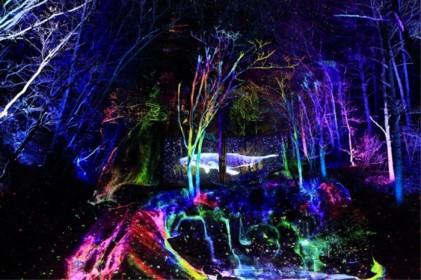 오크밸리 3D 라이팅쇼 '소나타오브라이트' 2019