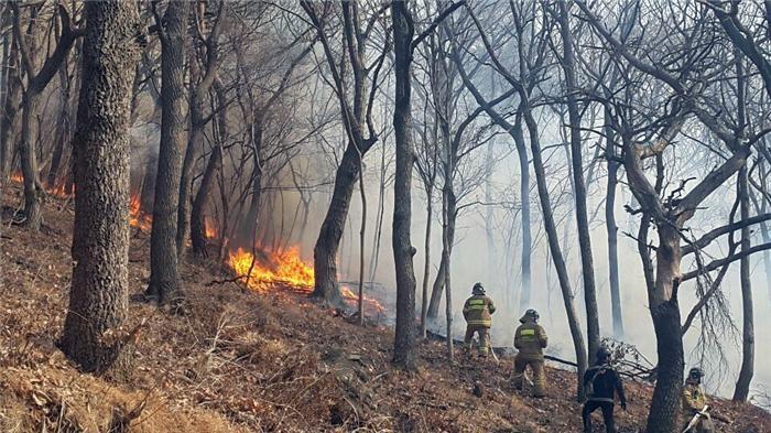 '건조하고 눈 없는 겨울'에 산불 급증…예년보다 2.3배 증가