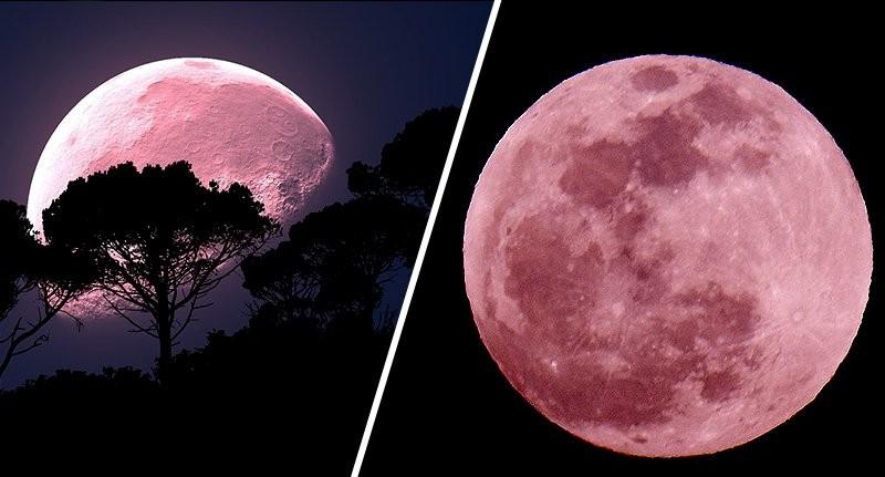 핑크문(Pink Moon)이 뜨니 블러드문 세월호처럼 인재로 많은 사람의 희생이 예상된다