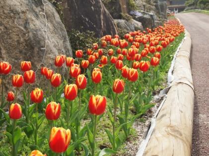 장흥 하늘빛수목원 튤립축제 2019