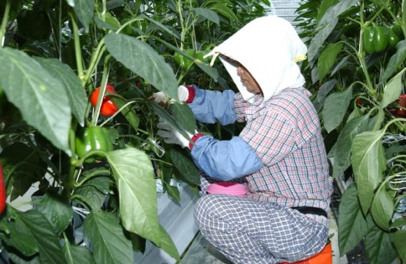 청송군, 원예소득작목 재배농가 적극 지원