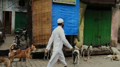 인도, 소고기 놓고 힌두교와 이슬람교 갈등 중