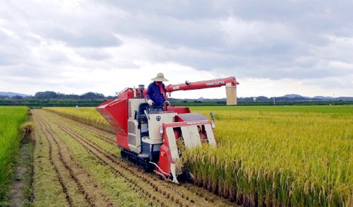 쌀 생산량 37년 만에 최저… 400만t 밑돌듯
