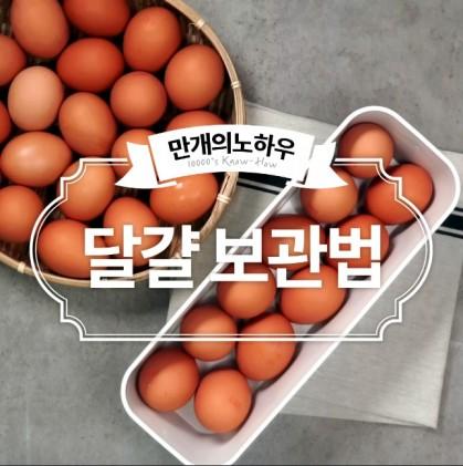 에그머니낭? 달걀에 대한 상식 그리고 보관법! 알아볼까용~?
