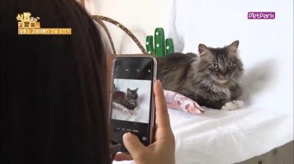 고양이 입양 프로필 사진촬영  2회