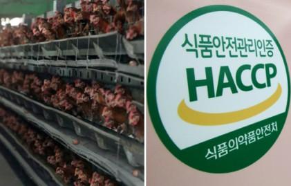 밀집사육·부실 인증·농피아…탈 난 '식품 안전'