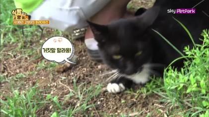 103마리 고양이의 파라다이스  7회