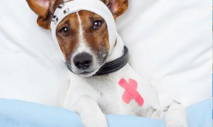 들쭉날쭉한 반려동물 진료비… 반려동물보험 가입률 '바닥'