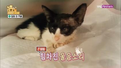 기적의 묘생2막을 시작한 소룡이  3회