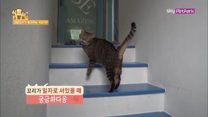 고양이는 꼬리로 기분상태를 알수 있다  4회