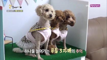 하늬씨 부부가 준비한 특별한 생일파티  29회
