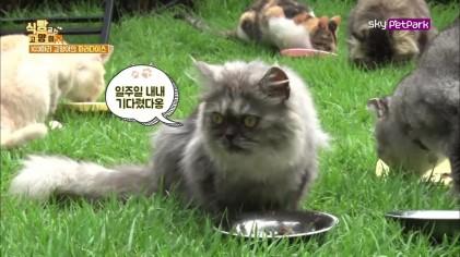 냥장판(?) 고양이들의 식사시간  7회