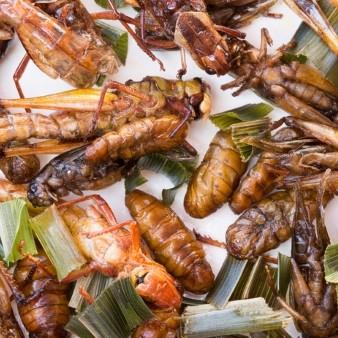 식용곤충, 미래식량으로 안전한가? 알레르기 증상 다수 발생