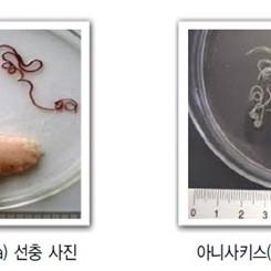 갈치, 고등어, 오징어… '고래회충'이 발견되는 어류는?
