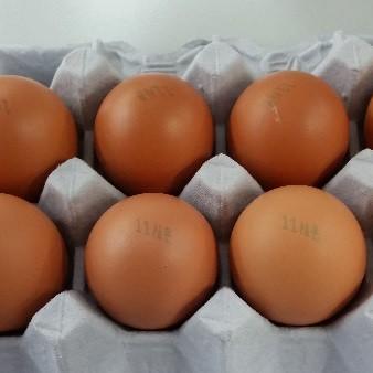 현재까지 확인된 살충제 계란 번호와 인체 유해성은?