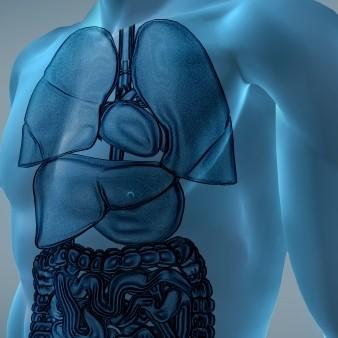 폐 질환 치료제, 비알코올성 지방간에 효과 가능성 제기