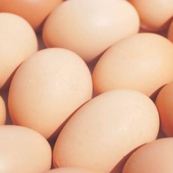 살충제 계란 먹으면 어떤 증상이 있나요?