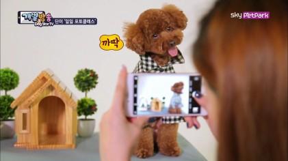휴대폰으로 강아지 고퀄 사진 찍기 꿀팁  14회