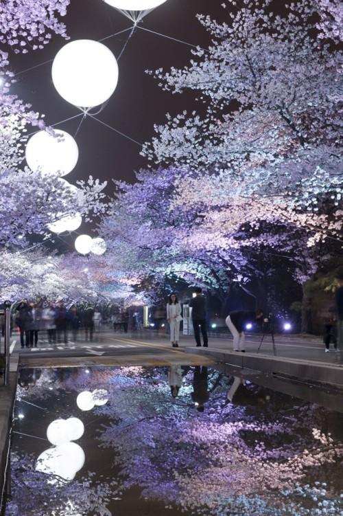 문화공간으로 거듭난 경마장…전시는 물론 벚꽃축제까지 '일석이조'