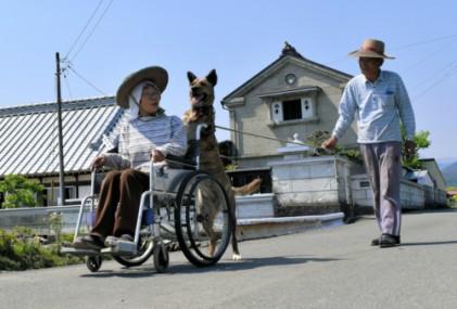日 할머니 휠체어 끄는 반려견 리리