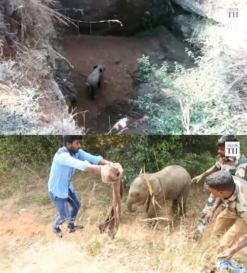 '하나, 둘, 셋!'…구덩이 빠진 코끼리 구하려 뭉친 印 주민들