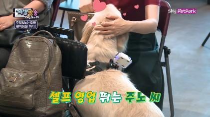 주노의 찾아가는 1:1 팬서비스♥  9회