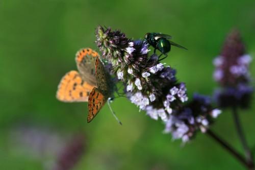날개 달린 곤충 급감…'생태계 아마겟돈' 우려