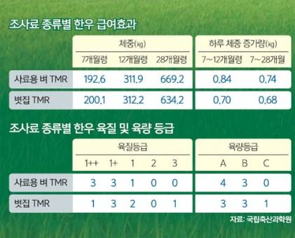 '사료용 벼'로 쌀 재고 과잉 막고 1등급 한우 비율 높인다
